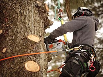 CS Taille et soin des arbres