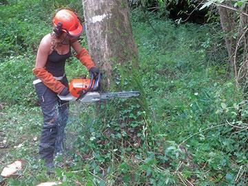 Formation BD Travaux forestier