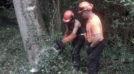 En reconversion professionnelle optez pour les métiers forestiers en plein air